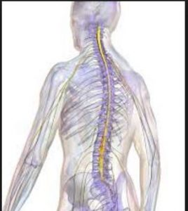 There is only one Los Angeles Spine Injury Lawyer to Hire